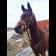 Уздечка Рэмбо-Миклема купить в интернет магазине конной амуниции 11589